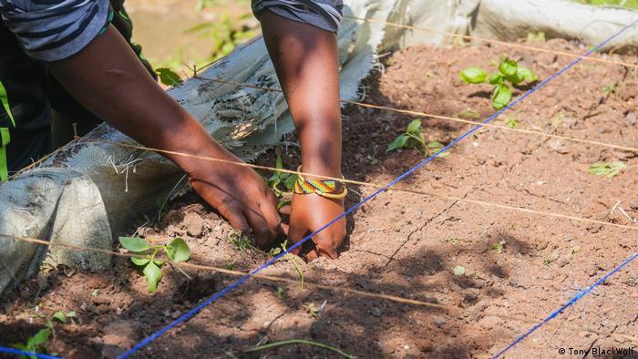 Placing seedlings in the soil of an urban garden.