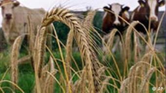 Аграрії не можуть отримати кредити під заставу землі