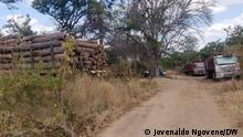 Holzschneiden Beschreibung: Abholzung der Wälder und Umweltverschmutzung in Tete Ort: Mosambik Datum: 23.08.2021 Autor: Jovenaldo Ngovene – DW Correspondent