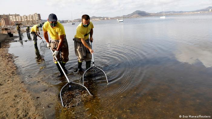 Bildergalerie | Mar Menor, Spanien | Massives Fischsterben in Salzwasserlagune