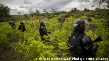 Police officers stand on a coca field during a manual eradication operation in Tumaco, southwestern Colombia, Wednesday, Dec. 30, 2020. (AP Photo/Ivan Valencia)