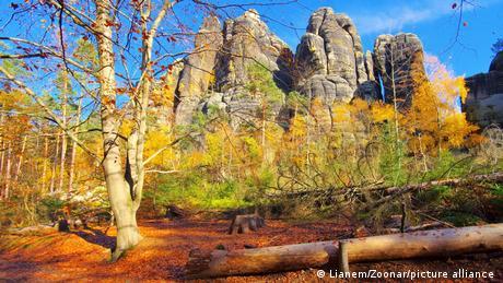 Germany Schrammsteine rocks in Saxon Switzerland, Saxony.