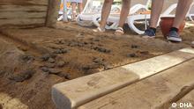 Viele Baby-Meereschildkröten sind in Antalya wegen der Laufbänder der Hotels gestorben. Datum: 27.08.2021 Schlagwörter: Antalya, Caretta Caretta, Meereschildkröte Copyright: DHA, Demirören Nachrichten Agentur. Alle Rechte sind frei für DW.