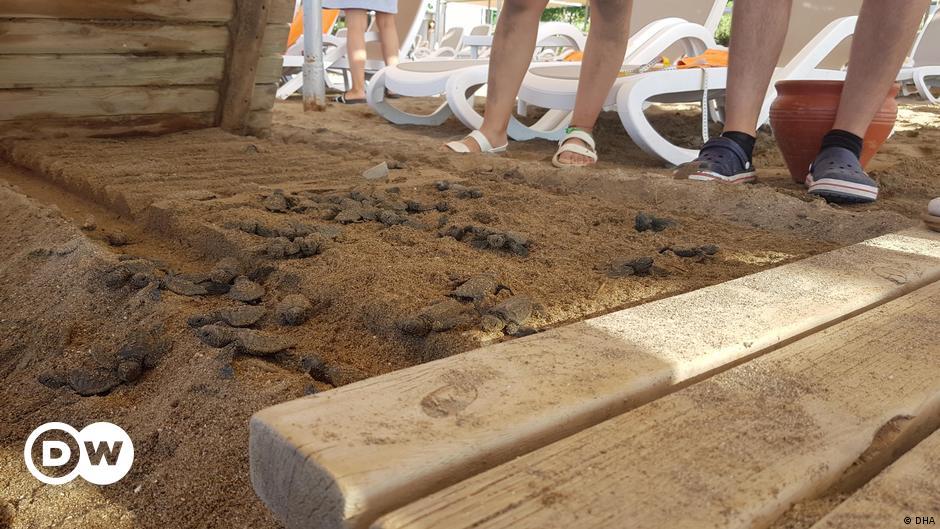 Caretta caretta ölümleri bağlantılı iki otele soruşturma