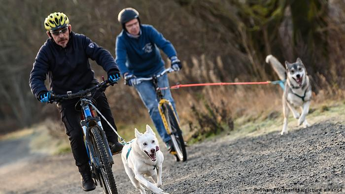 Two people bike with their dogs on a path