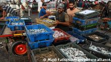 26.08.2021 Buyers gather to select fish put on sale at the seafront of Gaza City, in the Palestinian enclave on August 26, 2021. (Photo by Majdi Fathi/NurPhoto)