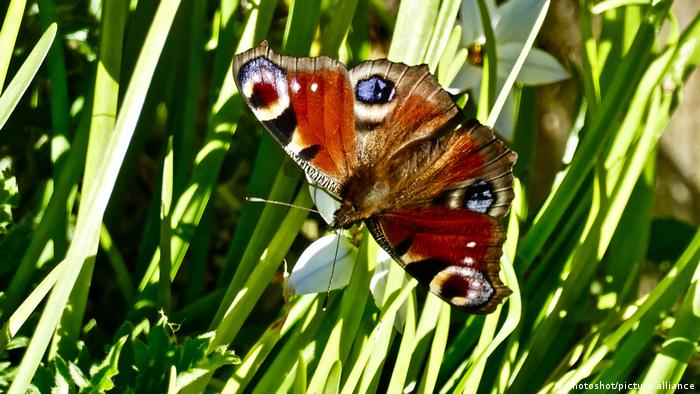 A close-up of a butterfly
