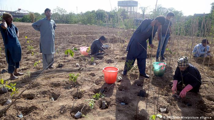 A group of people planting trees in Pakistan
