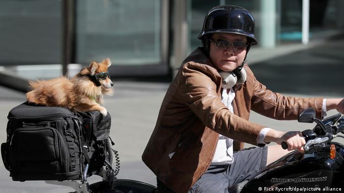 BdT Australien Motorradfahrer Hund Schutzbrille