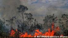 Feuer breitet sich in einem Waldstück aus. In Südamerika wüten derzeit schwere Waldbrände. Durch Brandrodung und Abholzung vernichtet der Mensch seit Jahrtausenden die Waldbestände - nicht zuletzt in Europa. In vielen Erdregionen toben die Brände derzeit besonders heftig. Vor allem Brasilien, Venezuela, Bolivien und Kolumbien sind von den Feuern betroffen. +++ dpa-Bildfunk +++