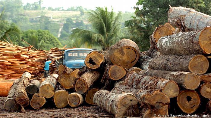 Больше всего жертв - среди активистов, борющихся против вырубки лесов