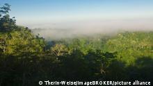 Dunst ueber Regenwald, Cristalino State Park, bei Alta Floresta, Mato Grosso, Brasilien / Amazonien
