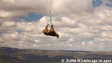 Südafrika | Nashorntransport mit Hubschrauber