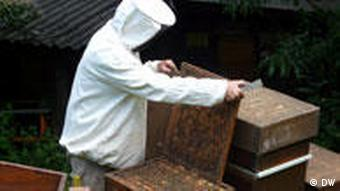 A beekeeper in Germany's Rhineland region (Photo: Arne Lichtenberg)