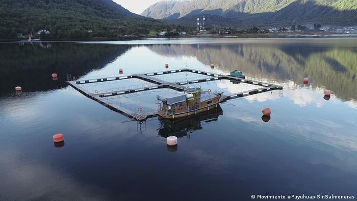 Jaulas para la producción de salmones en Puyuhuapi