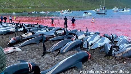 Estas y otras imágenes de la matanza causaron estupor en el mundo