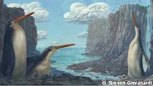 +++nur zur abgesprochenen Berichterstattung++++ Ein riesiger versteinerter Pinguin, der von neuseeländischen Schulkindern entdeckt wurde, wurde von Forschern der Massey University in der Fachzeitschrift Journal of Vertebrate Paleontology als neue Art vorgestellt. Der Kawhia-Riesenpinguin Kairuku waewaeroa. Bildnachweis Simone Giovanardi.