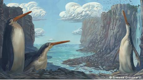 El pingüino gigante, Kairuku waewaeroa.