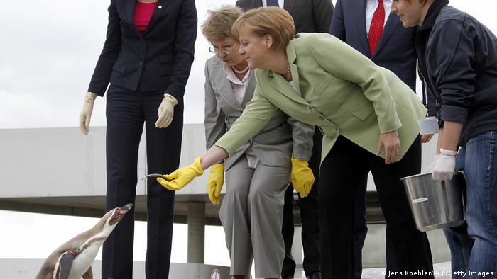 Angela Merkel feeding a penguin