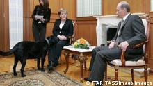 ITAR-TASS 88: SOCHI, RUSSIA. JANUARY 21. President of Russia Vladimir Putin (R) and German Chancellor Angela Merkel hold a working meeting at Bocharov Ruchei presidential residence near the Black Sea resort of Sochi. At left is Koni, President Putin s black Labrador Retriever. PUBLICATIONxINxGERxAUTxONLY Highlight TASS_427894