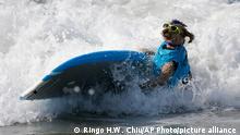 कुत्तों का सर्फिंग मुकाबला