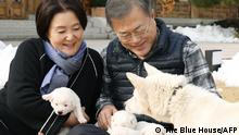 This handout provided by the South Korean presidential Blue House taken on November 25, 2018 shows South Korean President Moon Jae-in (R) and his wife Kim Jung-sook looking at six puppies born from a Pungsan-breed dog, gifted by North Korean leader Kim Jong Un, at his residence in Seoul. - The first images have been released on November 26 of a litter of six puppies whelped by one of the dogs North Korean leader Kim Jong Un gave Seoul's President Moon Jae-in. (Photo by handout / The Blue House / AFP) / RESTRICTED TO EDITORIAL USE - MANDATORY CREDIT AFP PHOTO / BLUE HOUSE - NO MARKETING NO ADVERTISING CAMPAIGNS - DISTRIBUTED AS A SERVICE TO CLIENTS
