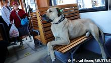 Street dog Boji, a regular user of commuter ferries, buses, metro trains and trams, sits on a tram in the Kadikoy district in Istanbul, Turkey October 5, 2021. Picture taken October 5, 2021. REUTERS/Murad Sezer