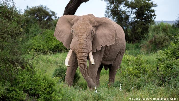 BG Tag der Biodiversität Afrika | Elefant