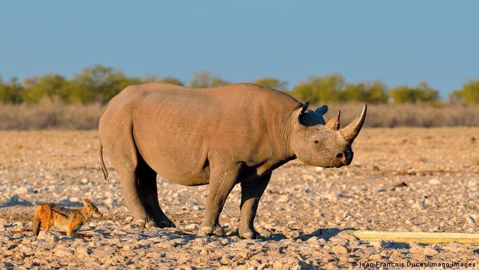 BG Tag der Biodiversität Afrika | Nashorn