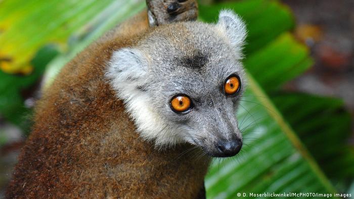 BG Tag der Biodiversität Afrika | Lemur