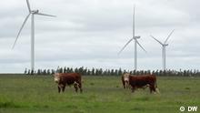 Windkraftanlage in Uruguay. Das Land produziert mehr als 90% seines Stroms aus erneuerbarer Energie. Dafür bildet das Land spezielle Ingenieure aus. Rechte: sind gegeben