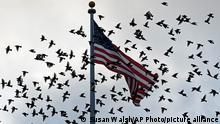 Vögel fliegen an einer Flagge vorbei, die über dem Old Executive Office Building auf dem Gelände des Weißen Hauses in Washington weht. Eine US-Delegation will sich an diesem Wochenende mit hochrangigen Vertretern der radikal-islamistischen Taliban aus Afghanistan in der katarischen Hauptstadt Doha treffen. (zu dpa: «Gespräche zwischen US-Delegation und Taliban in Doha geplant») +++ dpa-Bildfunk +++