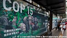©/MAXPPP - KUNMING, CHINA - OCTOBER 11: A poster promoting the 15th meeting of the Conference of the Parties to the Convention on Biological Diversity (COP15) is seen on the street on October 11, 2021 in Kunming, Yunnan Province of China. (Photo by Li Jiaxian/China News Service)