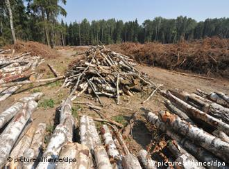 Trees cut down in the Khimki forest