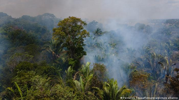 Fires in the Amazon rain forest