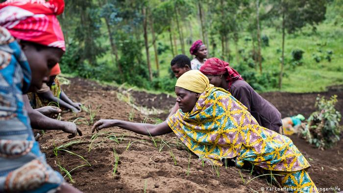Trabalhadores em plantação na África