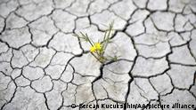 KAYSERI, TURKEY - SEPTEMBER 23: A view of cracked pattern of dry Yay Lake bed in Kayseri, Turkey on September 23, 2021.The effects of drought in September are also felt to a great extent in Yay Lake in Sultan Reeds, which is among the important wetland areas of Turkey and a frequent destination for migratory birds. Sercan Kucuksahin / Anadolu Agency