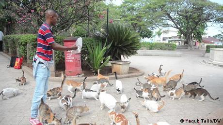 Man throwing feed to stray cats in Zanzibar