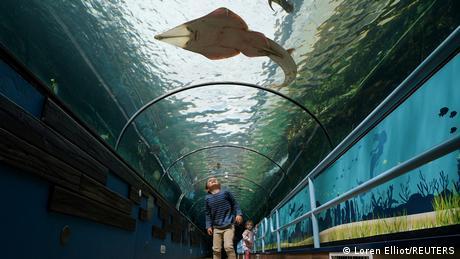 Un niño observa un pez que nada en un túnel de acrílico por sobre su cabeza en el acuario de Sídney, Australia.