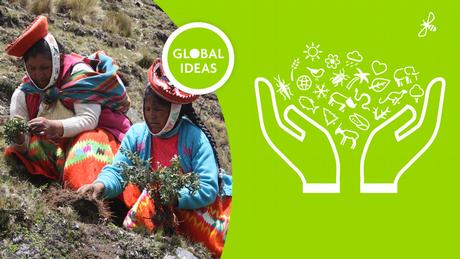 DW Global Ideas Lernpaket #9 Indigene (Teaser)