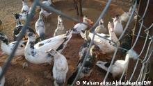 einen Bauernhof in Finaré, in der Nähe von Niamey, Niger Copyrights : sind von unserem Korri in Niger, Mahamadou Abdoulkarim