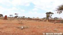 Cattel are dying due to drought in South East Ethiopia, Borena.
