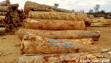 Wann wurde das Bild gemacht?: 20.10.2021 Wo wurde das Bild aufgenommen?: Cuando Cubango, Angola Wer hat das Bild gemacht/Fotograf?: Adolfo Guerra Bildbeschreibung: Umweltverbrechen bedrohen die Natur in Cuando Cubango