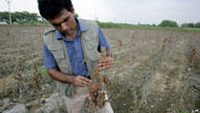 Pakistan Flut Hochwasser Landwirtschaft