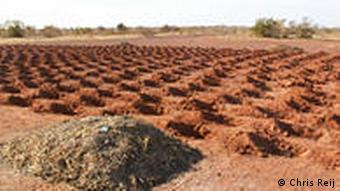 Zai or traditional planting pits in Mali