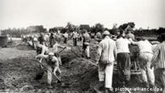Concentration camp inmates working in a field