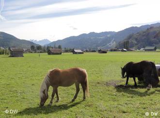 Horses graze in a meadow in Garmisch