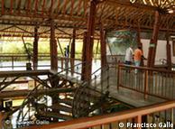 El bambú, también conocido como