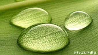 Wasser Umwelt Tropfen auf grünes Blatt
