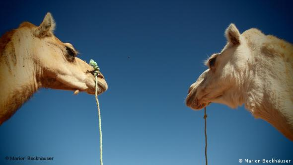 Sounth Algeria, the camel couple in Janet. Copyright: Marion Beckhäuser.